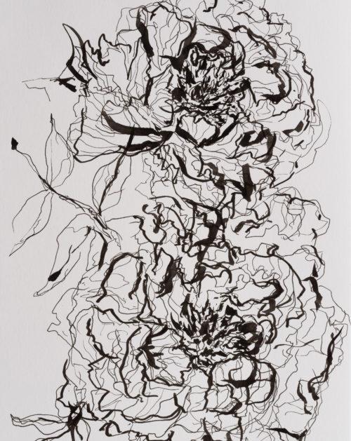 Peonies on Paper | Elizabeth Power artist